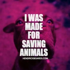 I was made for saving animals. Wait, that has backfired on me before. Oh well - I'll still persist. My Future Job, Wildlife Biologist, Vet Assistant, Tech Humor, Pet Vet, Vet Clinics, Save Animals, Funny Animals, Veterinary Medicine