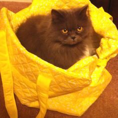Fluffy Persian :) she loves getting in bags.