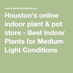 Houston's online indoor plant & pot store - Best Indoor Plants for Medium Light Conditions