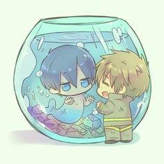 Anime: Free! Iwatobi Swim Club  Character: Makoto Tachibana ( 橘 真琴) □■ Kawaii