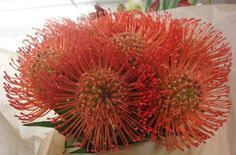 This is a cube vase floral arrangement that features orange pin-cushion protea.  See our entire selection at www.starflor.com.  To purchase any of our floral selections, as gifts or décor, please call us at 800.520.8999 or visit our e-commerce portal at www.Starbrightnyc.com. This composition of flowers is generally available for same day delivery in New York City (NYC). SQ162