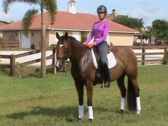 Annika P- 1st Level, Swedish Warmblood mare