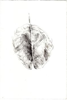 263 Seed Bank, My Works, Insects, Drawings, Animals, Animales, Animaux, Drawing, Animal