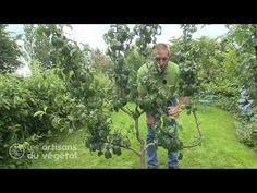 Taille   Ma passion du verger Plantation, Permaculture, Nature, Aquarium, Garden, Passion, Potager Garden, Lemon, Growing Fruit Trees