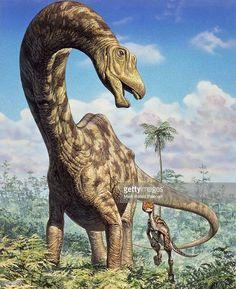 "Seismosaurus ""earthquake lizard"" : Classification Règne Animalia Classe Sauropsida Super-ordre Dinosauria Ordre Saurischia Sous-ordre † Sauropodomorpha Infra-ordre † Sauropoda Division † Neosauropoda Super-famille † Diplodocoidea Famille † Diplodocidae Sous-famille † Diplodocinae Genre † Diplodocus"