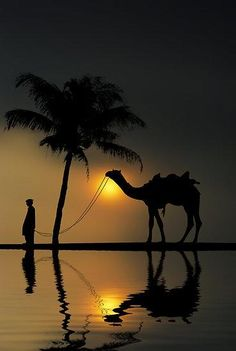 """To Succeed, you must reach for the stars, and let your imagination find its own path"" ― Tahir Shah, In Arabian Nights. might be relaxing to bond with a camel :) Amazing Photography, Nature Photography, Foto Picture, Cool Photos, Beautiful Pictures, Nature Pictures, Sunset Silhouette, Arabian Nights, Belle Photo"
