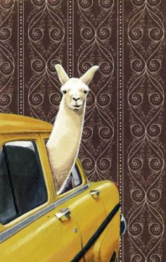 You need a new phone wallpaper #theberry #wallpaper #llama