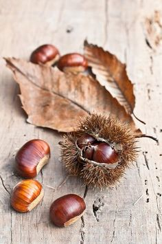 Brown leaves and red conkers - Autumn.