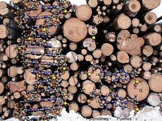 DNA Fingerprinting Used to Fight Illegal Logging