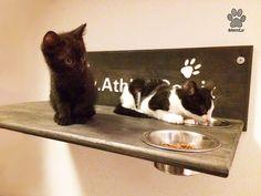 Mokha e Vito si rilassano sulla loro mensola artiginalale per gatti in color grigio grafite con ciotole e scritta bianca intagliata