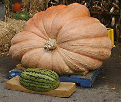 Another Shot of the Same Pumpkin and Watermelon (Sans Clown)
