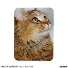 TABBY CAT MAGNET RECTANGULAR PHOTO MAGNET