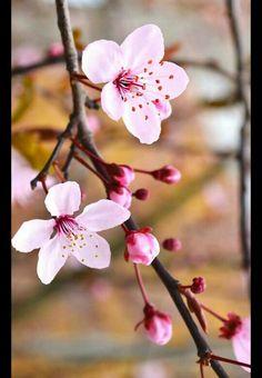 Pink flower Flower Petals, My Flower, Flower Art, Small Flowers, Beautiful Flowers, Tattoo Feminin, Sakura Cherry Blossom, Flower Aesthetic, Peach Blossoms
