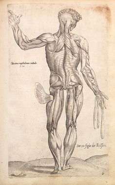 The 24 best andreas vesalius images on Pinterest | Andreas vesalius ...