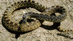 Image Gallery: Snakes of the World