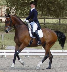 Really awesome Dressage website by Theresa Sandin. Sustainable Dressage. ANY rider, not just dressage, should look at this site. Very informative and explained well.