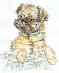 BRUSSELS GRIFFON PUP Original Watercolor on Ink Print Matted 11x14 Ready to Frame