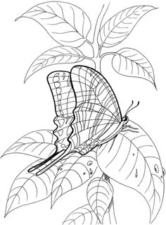 Butterfly Stand On The Leave Coloring page