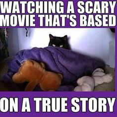 Watching scary movie cat, Fear, Funny, funny animal, Ghost, Horror, Movie