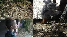 Sydney Australia Animals | When: The Australian Animal Adventure official launch Tuesday, 13 ...
