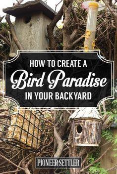 Bird Baths. Bird Houses. Bird Feeders. and How to Keep Your Backyard Birds Happy