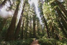 freundevonfreundentravel:  From theCalifornia and Oregon...