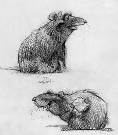 Character Design from Ratatouille by Carter Goodrich
