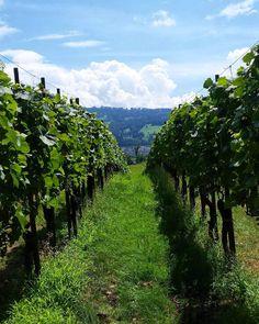 Insel Ufenau | Erholung in Zürich Vineyard, Mountains, Nature, Travel, Outdoor, Recovery, Island, Outdoors, Naturaleza