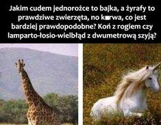 Very Funny Memes, Wtf Funny, Avatar Ang, Polish Memes, Funny Mems, Life Memes, Creepypasta, Best Memes, Have Time