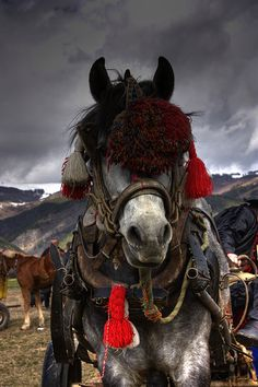 Draft Horse Easter in Bulgaria