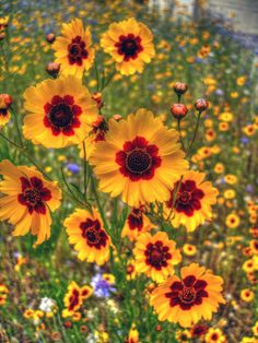 Beautiful Types of Flowers + A to Z With Pictures - Flowers / Blumen - Flowers Nature, Wild Flowers, Yellow Flowers, Cosmos Flowers, Poppy Flowers, Sunflower Flower, Bright Flowers, Summer Flowers, Fresh Flowers