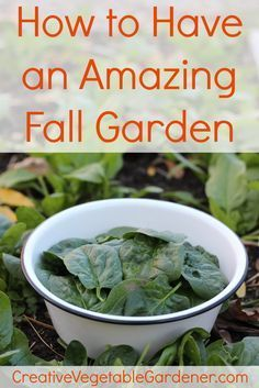 If you're not harvesting and cooking from your garden in late fall then you're missing out on one of the best seasons in the vegetable garden.