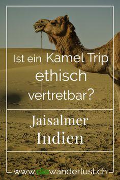 Wolltest du immer schon eine Kamel Tour machen? Wir haben uns viele Gedanken gemacht, ob so eine Trip ethisch vertretbar ist. Alle Informationen findest du hier in unserem Blogartikel über die wunderbare goldene Stadt Jaisalmer. #jaisalmer #indien #kameltrip #kameltour Jaisalmer, Laos, Safari, Beste Hotels, Der Bus, Asia, Movies, Movie Posters, Wanderlust
