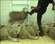 humane ?