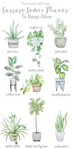 easy houseplants - easy indoor plans - green thumb - pothos plant - aloe vera - rubber tree maintenance - spider plant - fiddle leaf fig tree - snake plant - houseplants for beginners