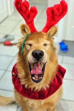 A mix of Reindeer + Dog + Lion