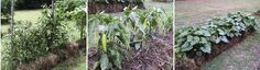 Growing a Straw Bale Garden - Grow and Make