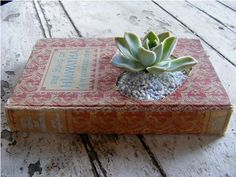 succulents planted in books