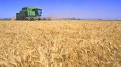 Wheat Harvesting