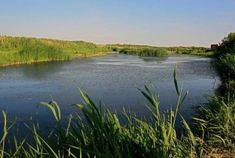 World Wetlands Day - Celebrating Our Wetlands