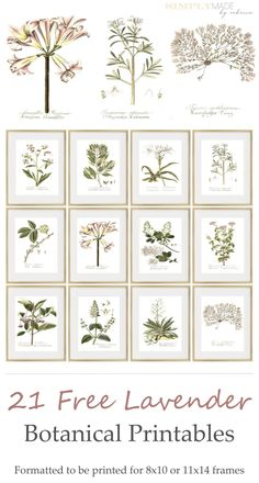 21 Free Lavender Botanical Printables - Simply Made by Rebecca Plastic Picture Frames, Wood Picture Frames, Picture On Wood, Frames On Wall, 11x14 Frame, 10 Frame, Framed Botanical Prints, Calligraphy Print, Printable Pictures