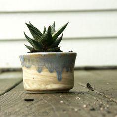 green aloe in lavender wash pottery
