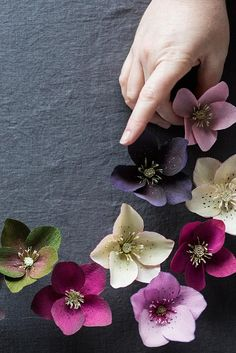Paper Hellebores : Design*Sponge // Tutorial by Kate Alarcón // Photography…