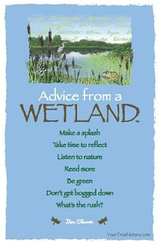 Advice from a wetland