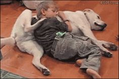 This dog just helping out his friend. | The 40 Greatest Dog GIFs Of All Time