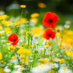 August Challenge, Flower Photography, Flora And Fauna, Flowers Garden, Colour, Plants, Color, Flower Photos, Plant