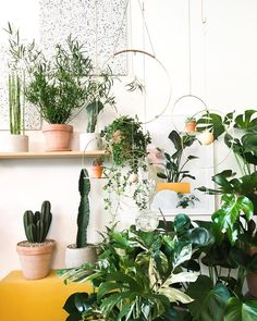 Greeny Indoor Plants Ideas Will Purify Your Rooms Air 08 Interior Garden, Interior Plants, Interior And Exterior, Indoor Garden, Indoor Plants, Outdoor Gardens, Real Plants, Green Nature, Green Life