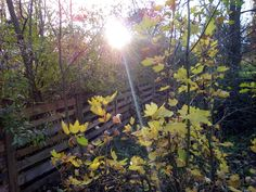 autor: jlez, Poland (tytuł: Natura 4063 - jesień, słońce, drzewo, liście)