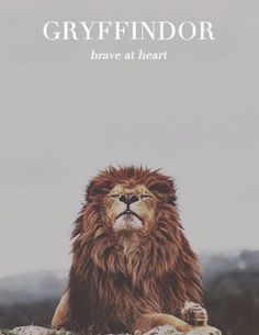 Cute photo of a lion, this reminds me of the Gryffindor mascot. Narnia, What Animal Are You, Scream, Harry James Potter, Le Roi Lion, Pics Art, Hogwarts Houses, Mischief Managed, Fantastic Beasts