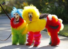22 Photos Southern California dog groomer Catherine Opson has a creative approach to dog grooming. Funny Dogs, Cute Dogs, Funny Animals, Cute Animals, Colorful Animals, Poodle Grooming, Cat Grooming, Child Grooming, Creative Grooming